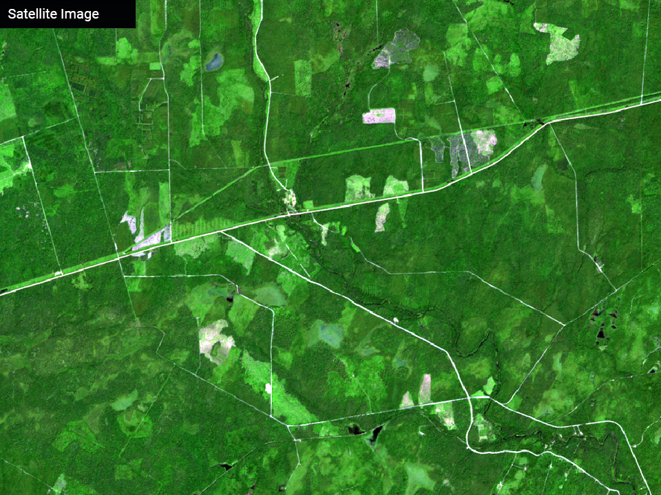 forestry-satellite-image